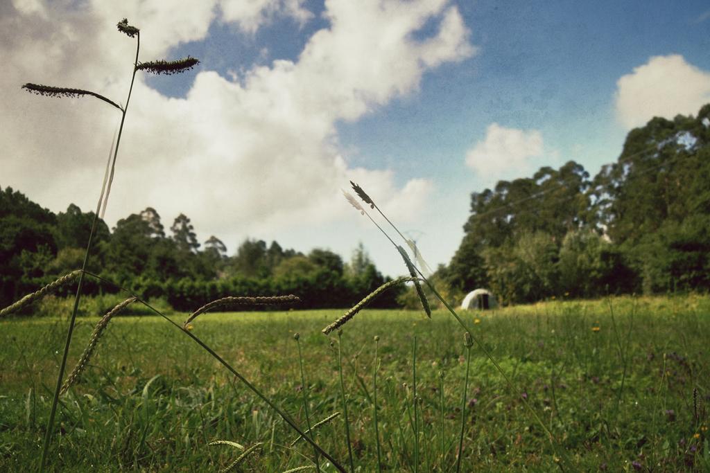 Campos. Galicia. Nacho Goberna @ 2011