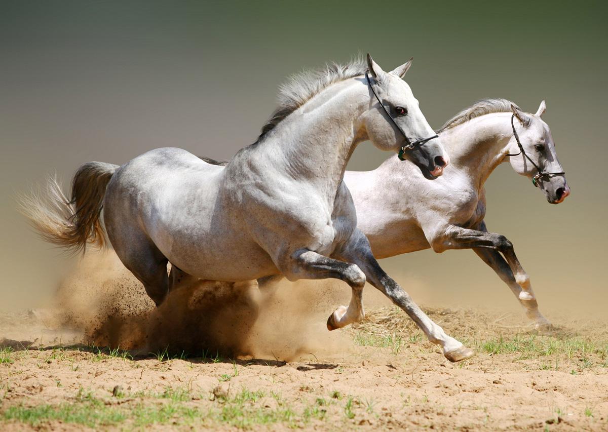 horses-563319